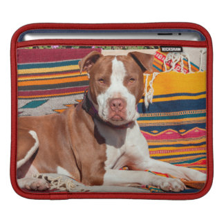 American Pit Bull lying on blankets Sleeves For iPads