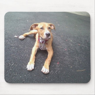 AMERICAN PIT BULL MIXED BREED MOUSEPAD