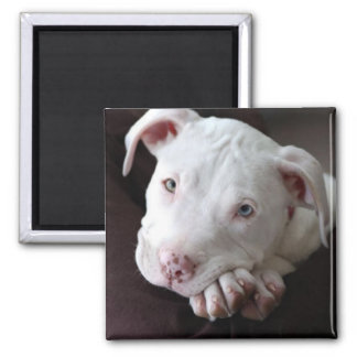 American Pit Bull Puppy Magnet