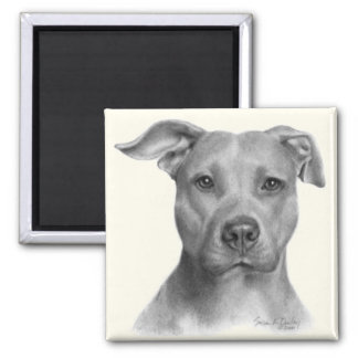 American Pit Bull Terrier 2 Inch Square Magnet