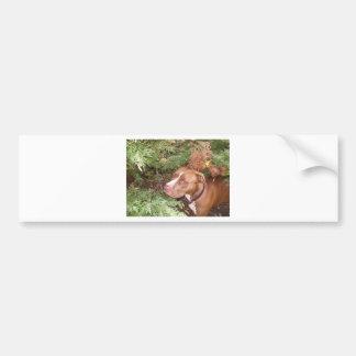 American Pit Bull Terrier- A Family Dog Bumper Sticker