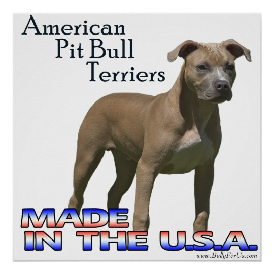 rescue dogs superhero pit bull dog badge button returns  |American Pit Bull Terrier Vintage