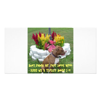 American Pit Bull Terrier Photo Greeting Card