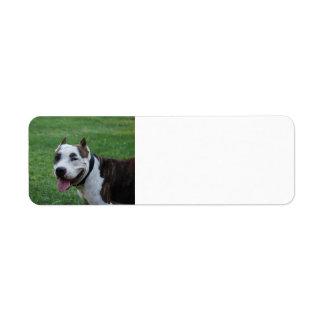 american pit bull terrier smiling label