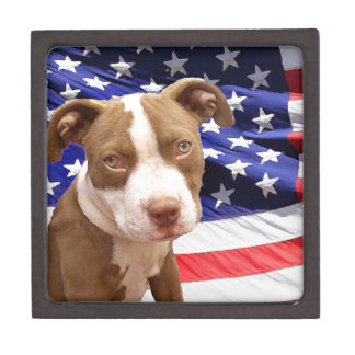 American Pitbull puppy Jewelry Box