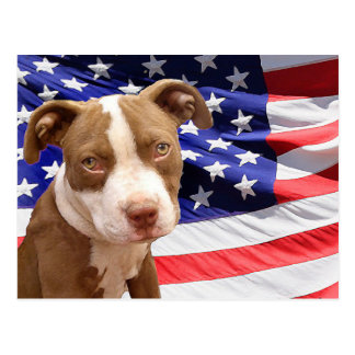 American Pitbull puppy Postcard