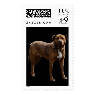 American Pitbull Terrier Cross Dog Stamp