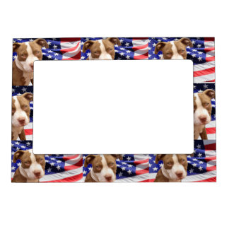 American Pitbull Terrier pup Picture Frame Magnets