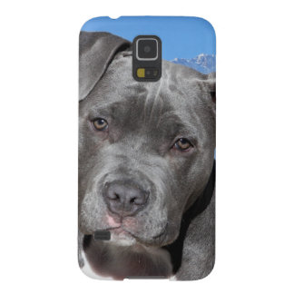 American Pitbull Terrier Puppy Dog Galaxy S5 Cover