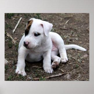 American PItbull Terrier Puppy Dog Print