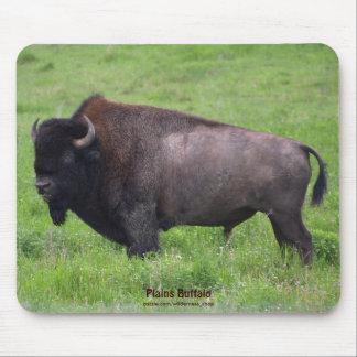 American Plains Buffalo Bison Bull Mouse Pad