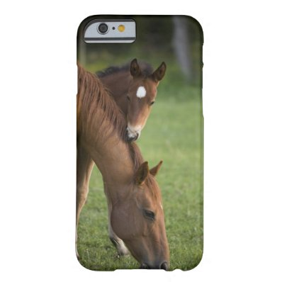 American Quarter horse mare and colt in field at Barely There iPhone 6 Case