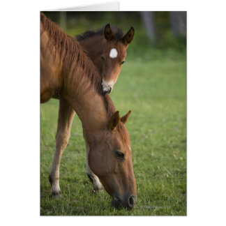 American Quarter horse mare and colt in field at Card