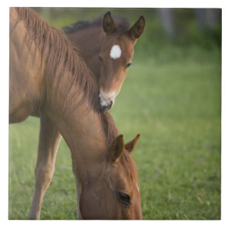 American Quarter horse mare and colt in field at Tile
