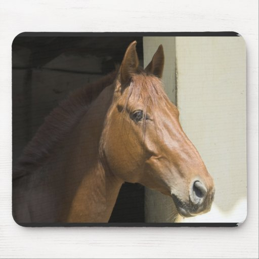 American Quarter Horse Mouse Pad