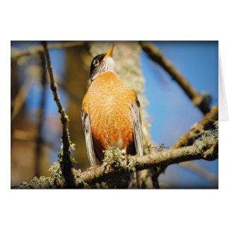 American Red Robin Card