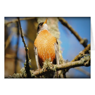 American Red Robin Stationery Note Card