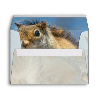 American Red Squirrel Envelope