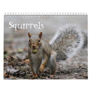American Red Squirrels and Eastern Gray Squirrels Calendar