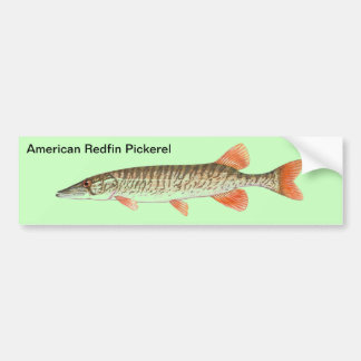 American Redfin Pickerel picture - fishing Bumper Sticker