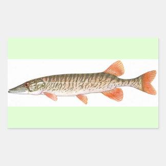 American Redfin Pickerel picture - fishing Rectangular Sticker