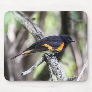 American Redstart Mouse Pad