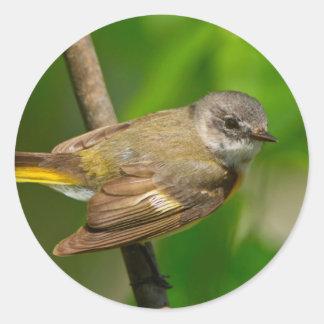 American Redstart (Setophaga Ruticilla) Female Classic Round Sticker