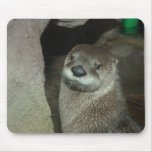 American River Otter (Lutra canadensis) Mouse Pad