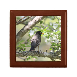 American Robin and Spring Blossoms Jewelry Box