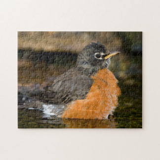 American Robin bathing 2 Puzzles