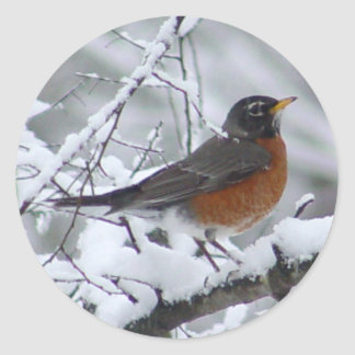 American Robin Bird Stickers