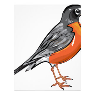 American Robin bird Vector illustration Letterhead