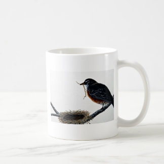 American robin building a nest mugs