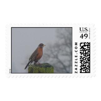 American Robin fencepost stamp