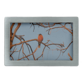American Robin home to roost Rectangular Belt Buckle