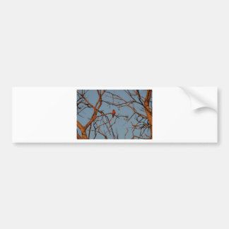 American Robin home to roost Bumper Sticker