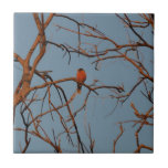 American Robin home to roost Ceramic Tiles