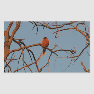 American Robin home to roost Sticker