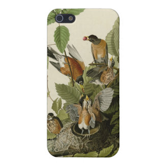 American Robin iPhone SE/5/5s Cover