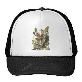 American Robin John Audubon Print Hat