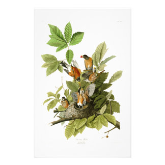 American Robin John James Audubon Birds of America Stationery