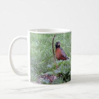 American Robin Male Mug