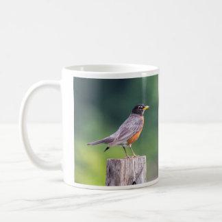 American Robin Coffee Mugs