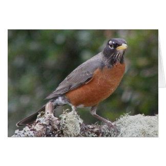 American robin. note card. card