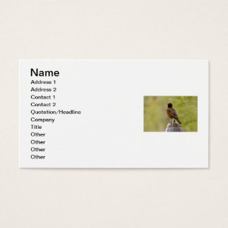 American Robin on a Cookie Jar Business Card