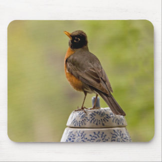 American Robin on a Cookie Jar Mouse Pad
