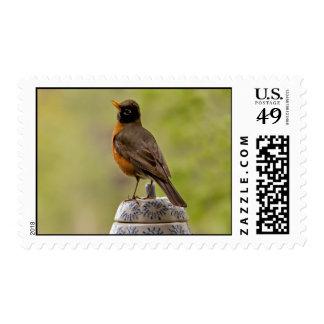 American Robin on a Cookie Jar Stamp