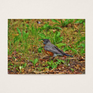 American Robin on the Grass Business Card