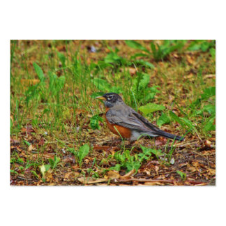 American Robin on the Grass Large Business Card