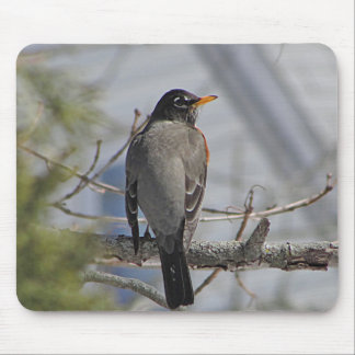 American robin photo mouse pad